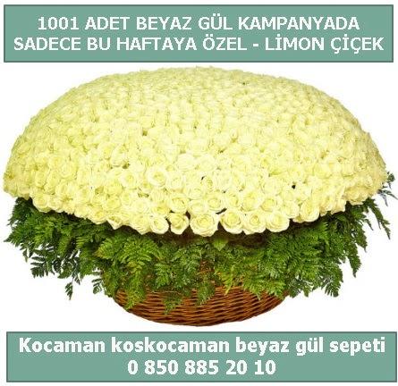 1001 adet beyaz gül sepeti özel kampanyada  Çorum çiçek gönderme