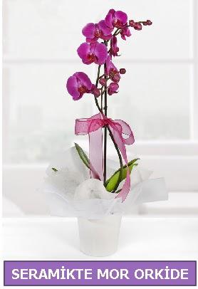 Seramik içerisinde birinci kalite tek dallı mor orkide  Çorum çiçek yolla