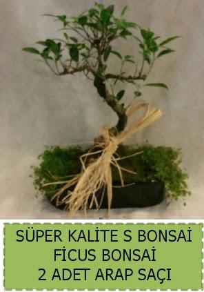 Ficus S Bonsai ve arap saçı  Çorum çiçek , çiçekçi , çiçekçilik