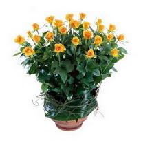 Çorum 14 şubat sevgililer günü çiçek  10 adet sari gül tanzim cam yada mika vazoda çiçek