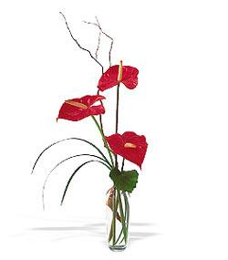 Çorum çiçekçiler  cam yada mika Vazoda 3 adet  antoryum