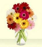 Çorum çiçek gönderme sitemiz güvenlidir  cam yada mika vazoda 15 özel gerbera