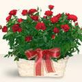Çorum çiçek yolla  11 adet kirmizi gül sepette