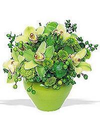 cam yada mika vazoda 5 adet orkide   Çorum İnternetten çiçek siparişi