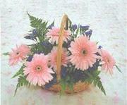 gerbera çiçeklerinde sepet   Çorum çiçekçi telefonları