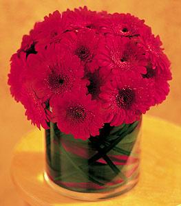 Çorum çiçekçi mağazası  23 adet gerbera çiçegi sade ve sik cam içerisinde