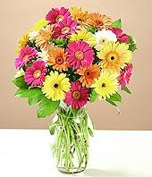 Çorum çiçek mağazası , çiçekçi adresleri  17 adet karisik gerbera