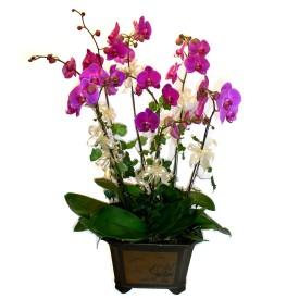 Çorum uluslararası çiçek gönderme  4 adet orkide çiçegi