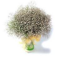 Çorum güvenli kaliteli hızlı çiçek  cam yada mika vazo içerisinde cipsofilya demeti