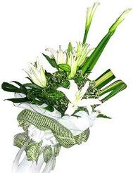 Çorum online çiçekçi , çiçek siparişi  3 dal kazablanka çiçegi ve yesillikler