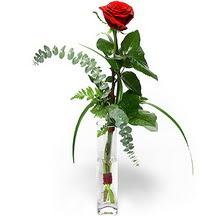 Çorum hediye sevgilime hediye çiçek  Sana deger veriyorum bir adet gül cam yada mika vazoda