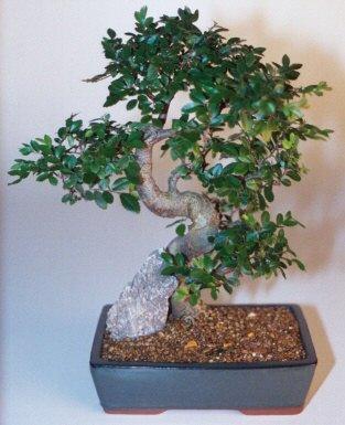 Çorum çiçek gönderme  ithal bonsai saksi çiçegi  Çorum çiçekçiler