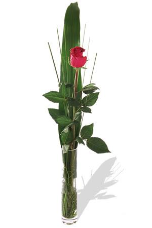 1 adet cam vazo içerisinde kirmizi gül  Çorum hediye çiçek yolla