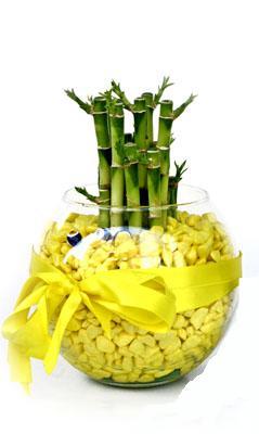cam fanus içerisinde bambo  Çorum internetten çiçek siparişi