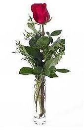 Vazo içerisinde 1 adet kirmizi gül  Çorum 14 şubat sevgililer günü çiçek