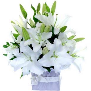 Çorum çiçekçi telefonları  2 dal cazablanca vazo çiçeği