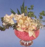 Çorum güvenli kaliteli hızlı çiçek  Dal orkide kalite bir hediye