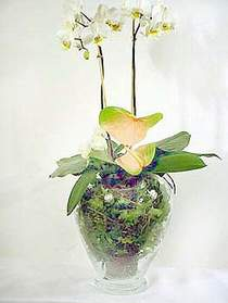 Çorum ucuz çiçek gönder  Cam yada mika vazoda özel orkideler