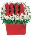 Çorum çiçek satışı  Kare cam yada mika içinde kirmizi güller - anneler günü seçimi özel çiçek