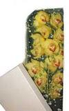 Çorum çiçek satışı  Kutu içerisine dal cymbidium orkide
