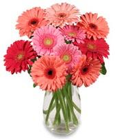 vazo içerisinde 13 adet gerbera çiçeği  Çorum çiçekçiler