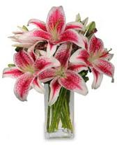 Vazo içerisinde 5 dal kazablanka çiçeği  Çorum 14 şubat sevgililer günü çiçek