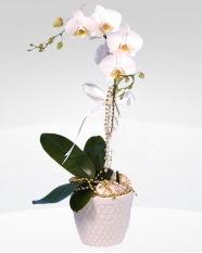 1 dallı orkide saksı çiçeği  Çorum İnternetten çiçek siparişi