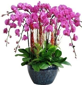 9 dallı mor orkide  Çorum hediye sevgilime hediye çiçek