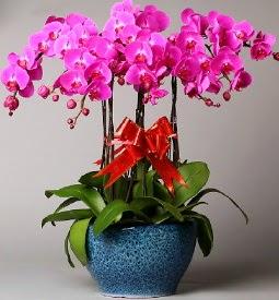 7 dallı mor orkide  Çorum çiçek mağazası , çiçekçi adresleri