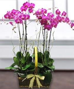 4 dallı mor orkide  Çorum online çiçekçi , çiçek siparişi
