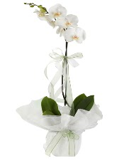 1 dal beyaz orkide çiçeği  Çorum cicek , cicekci