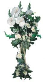 Çorum güvenli kaliteli hızlı çiçek  antoryumlarin büyüsü özel