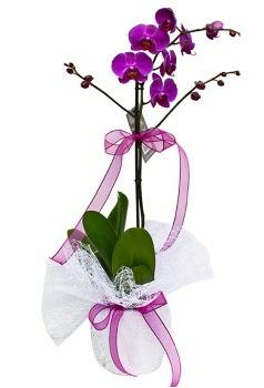 Tek dallı mor orkide  Çorum çiçek , çiçekçi , çiçekçilik