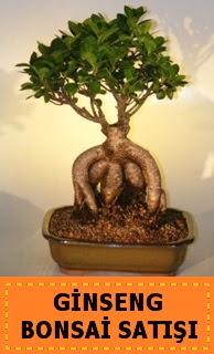 Ginseng bonsai satışı japon ağacı  Çorum uluslararası çiçek gönderme