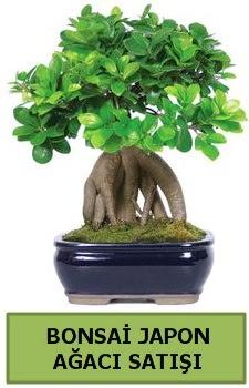 Bonsai japon ağacı satışı  Çorum ucuz çiçek gönder