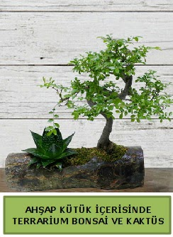 Ahşap kütük bonsai kaktüs teraryum  Çorum online çiçek gönderme sipariş