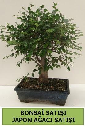 Minyatür bonsai japon ağacı satışı  Çorum çiçek gönderme