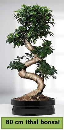 80 cm özel saksıda bonsai bitkisi  Çorum çiçek , çiçekçi , çiçekçilik
