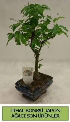 İthal bonsai japon ağacı bitkisi  Çorum çiçek servisi , çiçekçi adresleri