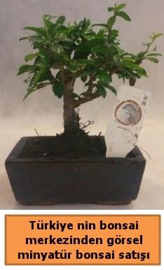 Japon ağacı bonsai satışı ithal görsel  Çorum çiçekçi telefonları