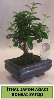 İthal japon ağacı bonsai bitkisi satışı  Çorum çiçek , çiçekçi , çiçekçilik