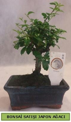 Minyatür bonsai ağacı satışı  Çorum çiçek satışı