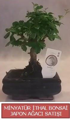 Küçük görsel bonsai japon ağacı bitkisi  Çorum hediye çiçek yolla