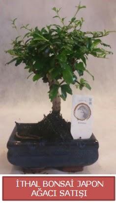 İthal küçük boy minyatür bonsai ağaç bitkisi  Çorum çiçek , çiçekçi , çiçekçilik