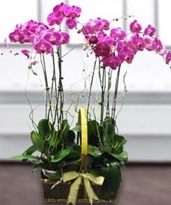 7 dallı mor lila orkide  Çorum çiçek gönderme