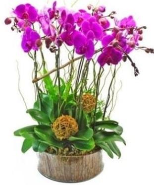 Ahşap kütükte lila mor orkide 8 li  Çorum internetten çiçek siparişi