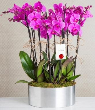 11 dallı mor orkide metal vazoda  Çorum çiçek gönderme