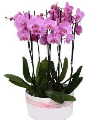 Beyaz seramik içerisinde 7 dallı mor orkide  Çorum çiçek , çiçekçi , çiçekçilik
