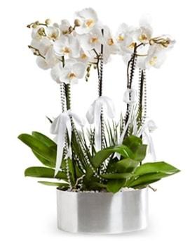 Beş dallı metal saksıda beyaz orkide  Çorum çiçekçi telefonları