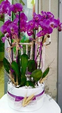 Seramik vazoda 4 dallı mor lila orkide  Çorum cicekciler , cicek siparisi